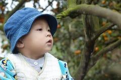 Chłopiec podnosi pomarańcze Zdjęcia Royalty Free