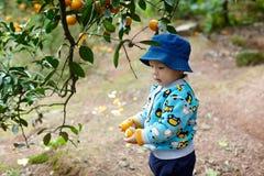 Chłopiec podnosi pomarańcze Fotografia Stock
