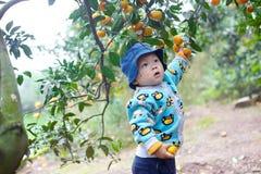 Chłopiec podnosi pomarańcze Obraz Stock