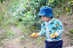 Chłopiec podnosi pomarańcze Zdjęcia Stock