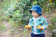 Chłopiec podnosi pomarańcze Fotografia Royalty Free