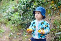 Chłopiec podnosi pomarańcze Obraz Royalty Free