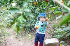 Chłopiec podnosi pomarańcze Obrazy Stock
