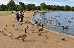 Chłopiec przy Round stawem, Kensington ogródy obraz royalty free