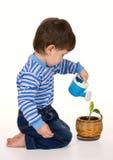 chłopiec roślina Zdjęcie Royalty Free
