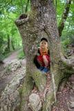 Chłopiec siedzi w wydrążeniu wielki stary drzewo zdjęcie stock