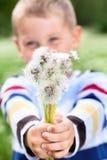 Chłopiec trzyma dandelions w rękach obraz stock