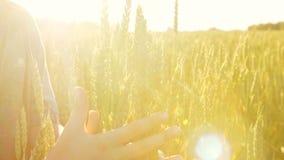 Chłopiec trzyma jego rękę na banatce na polu zbiory