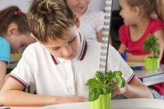 Chłopiec uczenie o roślinach w szkolnej klasie Obrazy Royalty Free