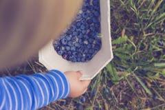 Chłopiec uprawy życiorys jagoda Zdjęcia Stock