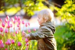 Chłopiec wącha różowych tulipany w ogródzie przy letnim dniem lub wiosną Zdjęcia Stock