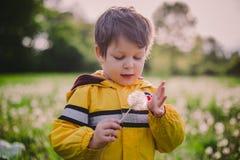 Chłopiec w dandelion polu zdjęcia royalty free