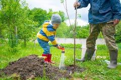 Chłopiec w ogródzie, nawadnia drzewa zasadzającego pasemkami sapling od węża elastycznego, obraz stock