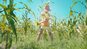 Chłopiec w słomianym kapeluszu bawić się w polu uprawnym dziecko trzyma kukurydzanych cobs i ono przedstawia jako kowboj zdjęcie wideo
