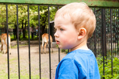 Chłopiec w zoo Fotografia Royalty Free