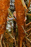Chłopiec wspina się drzewa Obrazy Royalty Free