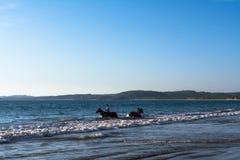 Chłopiec z ich koniami są wśrodku Boquita Manzanillo Colima plaży zdjęcie stock