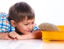 Chłopiec z jeżem Zdjęcie Royalty Free