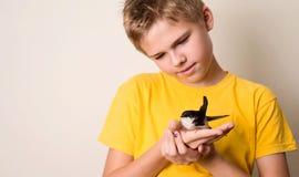 Chłopiec z zdradzonym dymówka ptakiem w jego rękach zamyka up Ratować dziki Obraz Stock