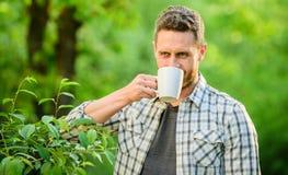 Ch? inteiro da folha Gosto excelente Aprecie a bebida quente Bebida natural Estilo de vida saud?vel Eu prefiro o ch? verde refres imagem de stock