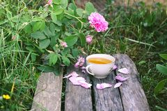 Ch? no estilo country no jardim do ver?o na vila Copo de Vintafe da tisana verde em placas de madeira resistidas e no rosa de flo fotografia de stock