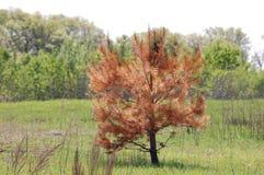 Chłodno drzewo Zdjęcie Stock