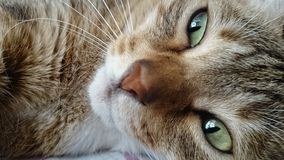 Chłodno kot Zdjęcia Stock