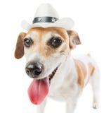 Chłodno kowboja pies Obrazy Royalty Free