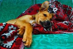 Chłodno pies kiedykolwiek obraz stock