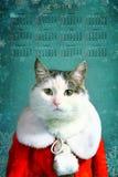 Chłodno Tom kot w Santa Claus szaty gzymsie kominka Obraz Royalty Free