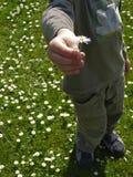 chłopcy daisy gospodarstwa Obrazy Royalty Free