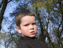 chłopcy drzewa zdjęcia royalty free