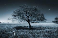 chłopiec czarodziejki pola bieg Zdjęcie Royalty Free
