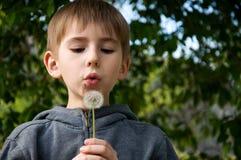 chłopiec dandelion Fotografia Royalty Free