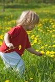 chłopiec dandelion pole Zdjęcie Royalty Free