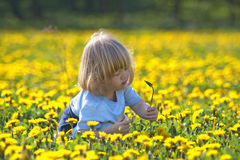 chłopiec dandelion pole Fotografia Stock
