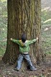 Chłopiec & drzewo Obrazy Stock