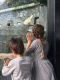 Chłopiec i dziewczyna w zoo Zdjęcia Stock