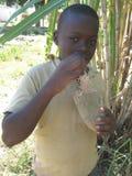 Chłopiec je baobab owoc Obraz Royalty Free