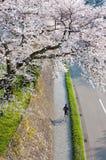 Chłopiec kolarstwo pod Sakura drzewem Obrazy Royalty Free