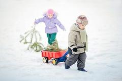 Chłopiec niesie choinki z czerwonym furgonem Dziecko wybiera choinki Obraz Stock
