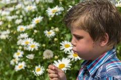 Chłopiec podmuchowy dandelion Fotografia Stock