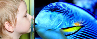 chłopiec ryba Zdjęcie Royalty Free