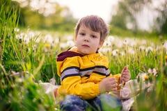 Chłopiec w dandelion polu Obrazy Stock