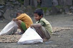 Chłopiec zbiera cardemon Fotografia Royalty Free