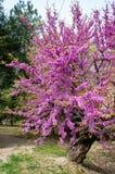 Ch?teau m?di?val italien : D?tail d'usine de floraison au printemps photo stock