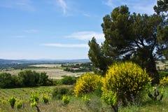 Châteauneuf-du-Pape Landscape Royalty Free Stock Photography