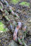 Chaîne d'Anchorage Images libres de droits