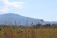 Chaîne de montagne avec des fleurs Photo libre de droits