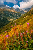 Chaîne de montagne dans le support de smokey photo libre de droits